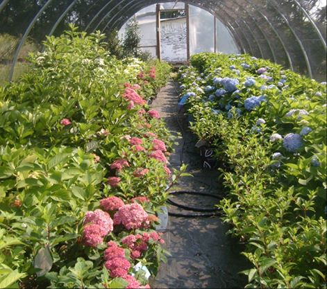 country-gardens_3