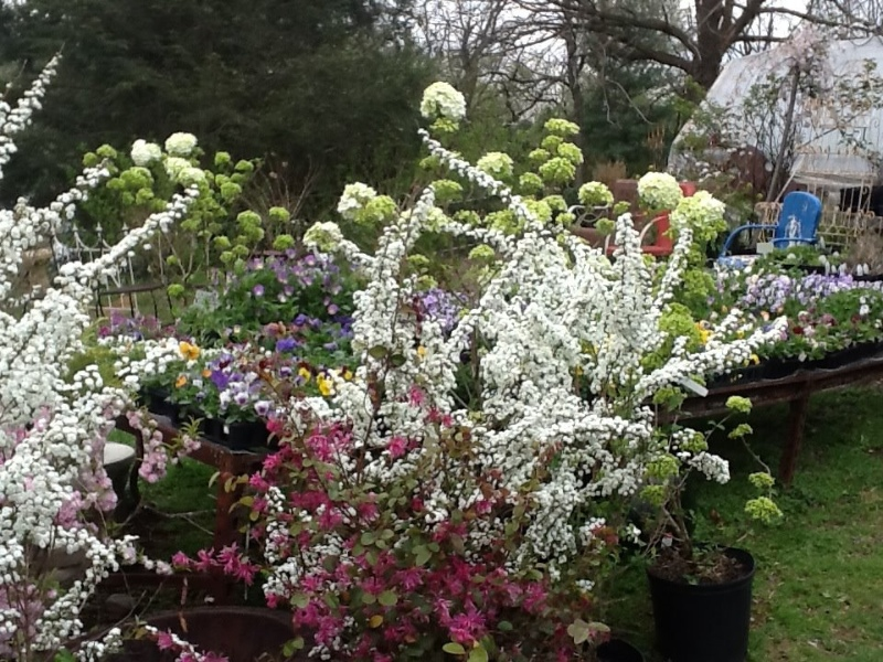 country-gardens_6